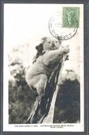 RP. *Australian Native Bear. Koala With Young* Ed. The Rose Series P-4390. Matasello De Favor. - Australia