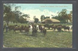 New South Wales. *Horses On A Station* Ed. Valentine. Circulada - Australia