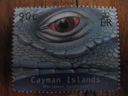 2123 Iguana Iguane Cyclura Oeil Oeuf Egg Reptile Nac Dragon Dinosaure 2004 - Reptiles & Batraciens
