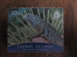 2124 Iguana Iguane Cyclura Oeil Oeuf Egg Reptile Nac Dragon Dinosaure 2004 - Reptiles & Batraciens