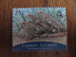 2126 Iguana Iguane Cyclura Oeil Oeuf Egg Reptile Nac Dragon Dinosaure 2004 - Reptiles & Batraciens