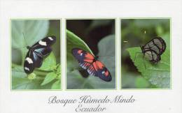 Lote PEP704, Ecuador, Postal, Postcard, Bosque Humedo Mindo, Mariposas, Butterfly - Ecuador