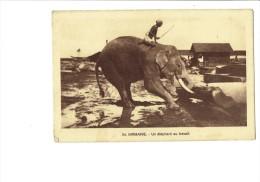 BIRMANIE - Un Elephant Au Travail - Homme Torse-nu Dresseur / Tronc D´arbre - N°24 - Elefanten