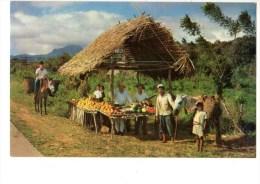 PANAMA---ISLAS DE SAN BLAS-----un Ranchito Tipico....-- Voir 2 Scans - Panama