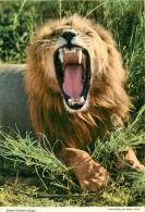 CPSM Lions    L1695 - Lions