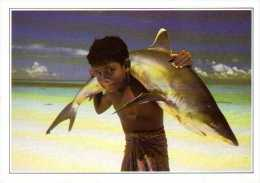 MALDIVES  -  Requin à Pointe Blanche - Maldives