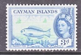 CAYMAN ISLANDS  141   *   PARROT  FISH - Cayman Islands