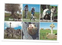 CPM - Sur Les CHEMINS De SAINT-JACQUES (48) Multivues : Pélerins, Chien, Croix, Coquille, Vaches...) - France
