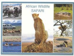 AFRICAN WILDLIFE SAFARI, EAST AFRICA, CHEETAH, MINT POSTCARD A++++ - Tigres