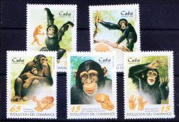 Evolution Of Humans, Chimpanze, Skull, Animals, Map - Scimpanzé