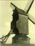 KRUISHOUTEM (O.Vl.) - Molen/moulin - Prachtige Close-up Van De Verdwenen Kapellemolen In 1933 (afkomstig Uit Eke) - Kruishoutem