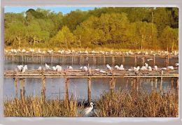 CPM - Avery Island - Louisania (Etats-Unis) - Bird Sanctuary - Other