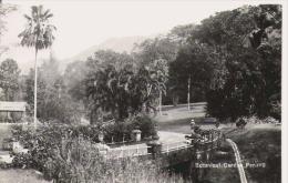 BOTANICAL GARDEN PENANG - Malaysia