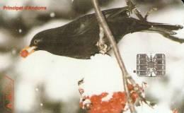 AND-046 TARJETA DE ANDORRA MIRLO (NUEVA-MINT SIN BLISTER) BIRD-PAJARO - Andorra