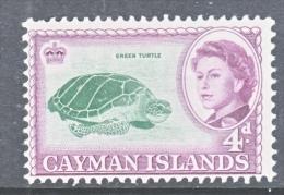 CAYMAN ISLANDS  159  *  FAUNA  GREEN  TURTLE - Cayman Islands