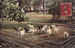 Jardin Des Plantes-l'enclos Des Moutons - Parks, Gärten