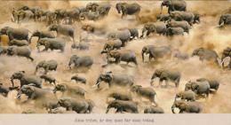 CPA ELEPHANTS - Éléphants