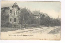 CP Liège Parc De Cointe Avenue Des Ormes Légèrement Colorisé Vers 1909 Rare - Liege