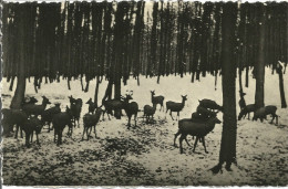 Libin. Biches Dans La Forêt D'Ardenne.........(voir Scan Verso) - Libin