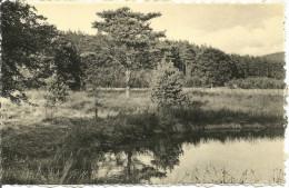 Libin.  Un Aspect Romantique De La Forêt D'Ardenne........(voir Scan Verso) - Libin