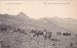 CPA Animée (15) CANTAL Une Vacherie Au Col De Cabre Vacher Vache Bovin Paysan - Zonder Classificatie