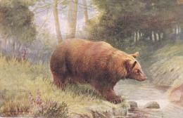 Artist Drawn The Brown Bear Postcard (AN049) Oilette - Bears