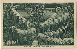 Café , Mata Forecida San José CR Plantation Café  Circulada 1933 Edit Gomez Miralles - Costa Rica