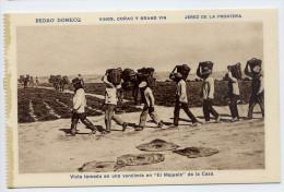 "Espagne-JEREZ DE LA FRONTERA - Pedro DOMECQ - Vinos Conac Y Grand Vin--Vendemia""El Majuelo"" (très Animée).....éd HMS - Espagne"