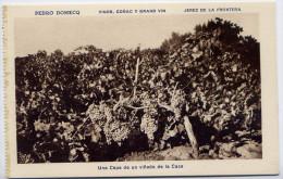 Espagne-JEREZ DE LA FRONTERA - Pedro DOMECQ - Vinos Conac Y Grand Vin--Una Cepa De Un Vinado De La Casa...........éd HMS - Espagne
