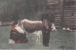 Mooie Postkaart Van Noorwegen  National 20  Koe      Scan 8100 - Noorwegen