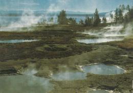 BF18640 Geyser Basin West Thum Yellowstone National Park USA Front/back Image - Yellowstone