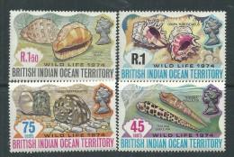 Océan Indien N° 59 / 62 XX  Coquillages, Les 4 Valeurs Sans Charnière, TB - Territoire Britannique De L'Océan Indien