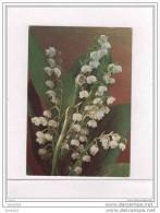 MUGUET - Porte Bonheur - Fleurs, Plantes & Arbres