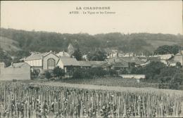 51 AVIZE / La Vigne Et Les Coteaux / - France