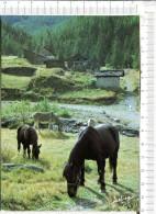 CHEVAUX  Et  ANE   -  Image Du Terroir   - Feeling - Pferde