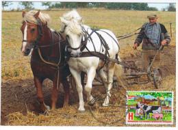 Belarus 2014 International Year Of Family Farm, Maximum Card, Horse Horses - Belarus