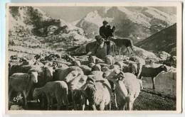 Pyrénées Océan Un Troupeau Dans La Montagne Transhumance Berger - Frankreich