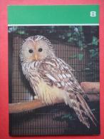 Ural Owl , Strix Uralensis - Moscow Zoo Birds - 1988 - Russia USSR - Unused - Oiseaux