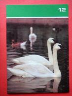 Trumpeter Swan , Cygnus Buccinator - Moscow Zoo Birds - 1988 - Russia USSR - Unused - Oiseaux