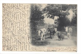 L1511 - Retour Des Champs Vaches Et Moutons - Elevage