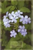 Lote PEP788, Cuba, Entero Postal, Postcard, 2008, Postal Stationary, Mama, Felicidades, Flor, Flower, Mother´s Day, 1 - Postales
