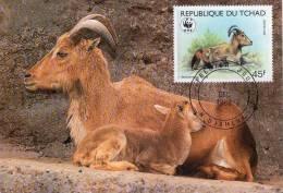 Lote PEP796, Tchad, Postal, Postcard, maximun card, TM, Barbary Sheep, WWF