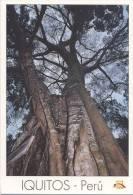 Lote PEP804, Peru, Postal, Postcard, Indigenous Issues, Iquitos, Arbol Cashapona, Tree Witch Broomstick - Perú