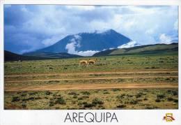 Lote PEP813, Peru, Postal, Postcard, Arequipa, Vicuñas, Volcan Misti, Volcano, Mountain, Fauna - Perú