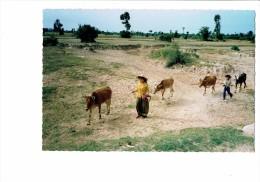 CAMBODGE Vaches Paysans - Femme Et Homme Serpe - Vache - 1992 - - Cambodja