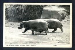 Uganda. *Hippo - The Queen Elizabeth National Park* Ed. Africa In Pictures. Nueva. - Uganda