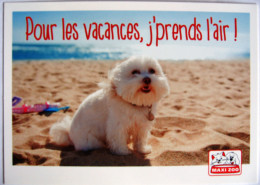 Chien Bichon Publicité Maxi Zoo Vacances Plage - Pubblicitari