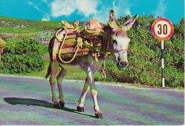 PC Croatia - Donkey  (7773) - Kroatien