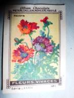 IMAGE Chocolat Peter Cailler Kohler Nestlé FLEUR VIVACE FLEURS VIVACES N 1 PAVOTS - Nestlé