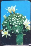 Belarus 1990 1  V   Flowers Fleurs Fleur Flower Cactus - Calendriers